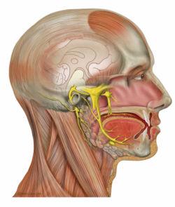 MENOPAUSE SYMPTOMS BLEEDING